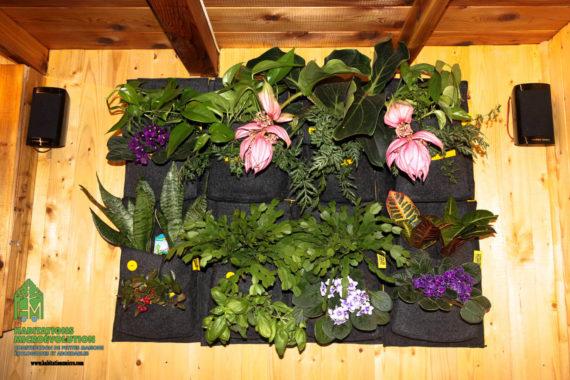 Une fois les plantes installées
